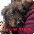 Adopt A Pet :: Cecilia