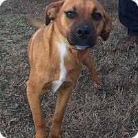 Adopt A Pet :: Juliet - Washington, DC