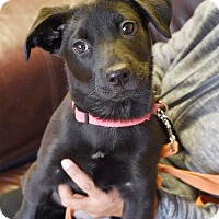 Adopt A Pet :: Lucy - Norwich, CT