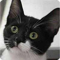 Adopt A Pet :: Reena - Davis, CA