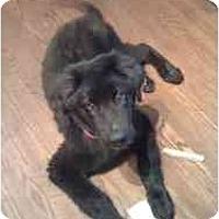 Adopt A Pet :: Doogan - Rigaud, QC