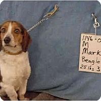 Adopt A Pet :: Mark/Pending - Zanesville, OH