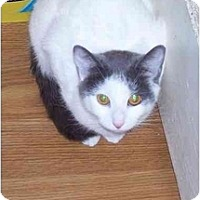 Adopt A Pet :: Lady Luck - Odenton, MD