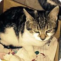 Adopt A Pet :: Cinnamin - Medford, NJ