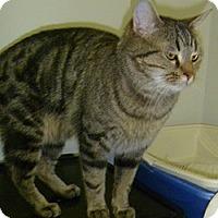Adopt A Pet :: Gus Gus - Hamburg, NY
