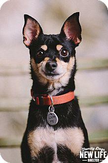 Shiba Inu Mix Dog for adoption in Portland, Oregon - Sparky Beach