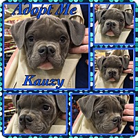 Adopt A Pet :: Kauzy - Cheney, KS