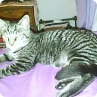 Adopt A Pet :: Bartley - Stanhope, NJ