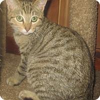 Adopt A Pet :: Robbie - Witter, AR