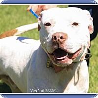 Adopt A Pet :: Alvin - Elizabethton, TN