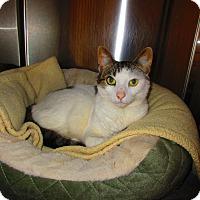 Adopt A Pet :: Harper - Toms River, NJ