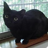 Adopt A Pet :: Gino - Witter, AR