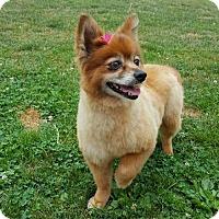 Adopt A Pet :: Annie - Harrisburg, PA