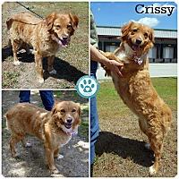 Adopt A Pet :: Crissy - Kimberton, PA