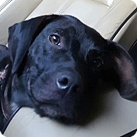 Adopt A Pet :: prissy - Gainesville, GA