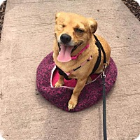 Adopt A Pet :: Zuri - Coldwater, MI