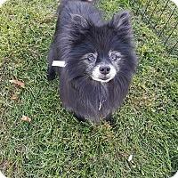 Adopt A Pet :: Sammy - Denver, CO