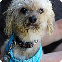 Adopt A Pet :: Gizmo - West Grove, PA
