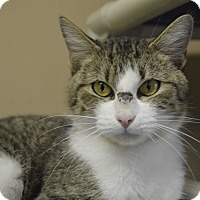 Adopt A Pet :: Mabel - Germantown, TN