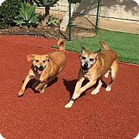 Adopt A Pet :: Ricky and Lucille - Carlsbad, CA