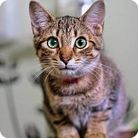 Adopt A Pet :: Peppermint - Markham, ON