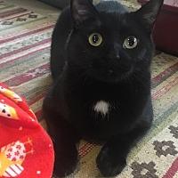Adopt A Pet :: Rogue - Frankfort, IL