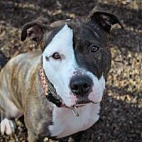 Adopt A Pet :: Napa - Elizabethtown, PA