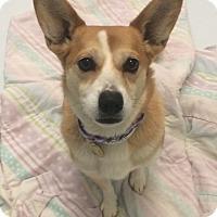 Adopt A Pet :: Cindy - Oak Ridge, NJ