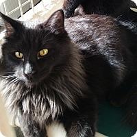 Adopt A Pet :: Gotham - Montgomery City, MO