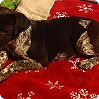 Adopt A Pet :: Tater - Marietta, GA