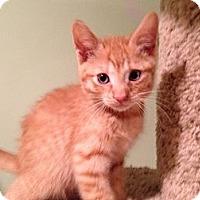 Adopt A Pet :: Brandon - East Hanover, NJ