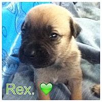 Adopt A Pet :: REX - Torrance, CA