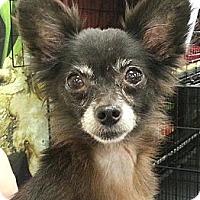 Adopt A Pet :: Blanca (Macy) - geneva, FL