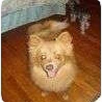 Adopt A Pet :: Gizmo - Alliance, NE