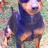 Adopt A Pet :: Budha - Scottsdale, AZ