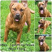 Adopt A Pet :: Rhea - Evansville, IN