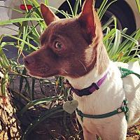 Adopt A Pet :: Wilbur - North Hollywood, CA