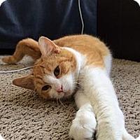 Adopt A Pet :: AUGUST - Ridgewood, NY