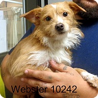 Adopt A Pet :: Webster - baltimore, MD