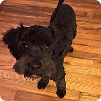 Adopt A Pet :: Licorice - Redondo Beach, CA