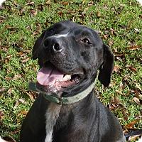 Adopt A Pet :: Marvin - Ravenel, SC
