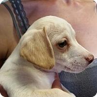 Adopt A Pet :: Fergus - Leduc, AB