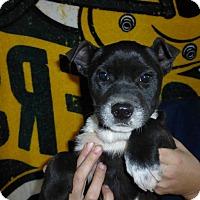 Adopt A Pet :: Annie - Oviedo, FL