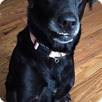 Adopt A Pet :: Anna - Louisville, KY
