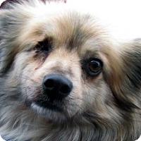 Adopt A Pet :: Captain - Germantown, MD