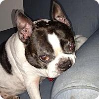 Adopt A Pet :: Baxter - Weatherford, TX