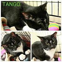 Adopt A Pet :: Tango & Cash - Cumberland and Baltimore, MD