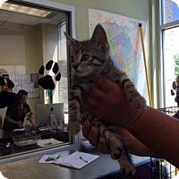 Adopt A Pet :: MONKEY - San Antonio, TX