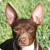 Adopt A Pet :: Maya - Edmonton, AB