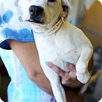 Adopt A Pet :: Booger - Appleton, WI